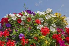 Geraniums, petunias and bidens, against blue sky Royalty Free Stock Photo