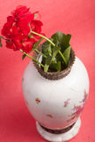 Geraniums Stock Photo