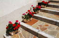 Geraniums on Stepped Street Royalty Free Stock Photos