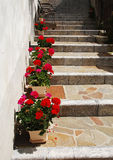 Geraniums on Stepped Street Stock Images