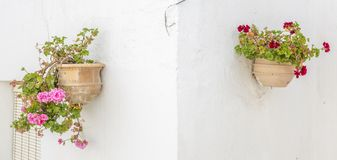 Geraniums. Are a typical Andalusian patio royalty free stock photo