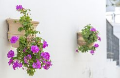 Geraniums. Are a typical Andalusian patio Royalty Free Stock Images