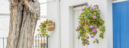 Geraniums. Are a typical Andalusian patio royalty free stock image