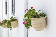 Geraniums. Are a typical Andalusian patio Stock Image