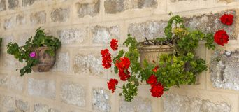 Geraniums. Are a typical Andalusian patio stock photos