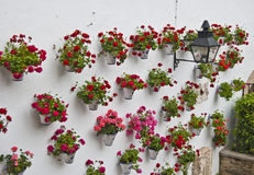 Geraniums on the wall. Of a typical Andalusian patio Stock Photo