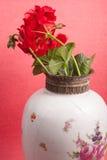 Geraniums Royalty Free Stock Photo