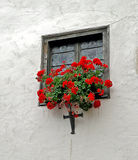 Geraniums in window box Royalty Free Stock Images