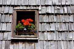 Geraniums at a window, Dolomites Royalty Free Stock Photo
