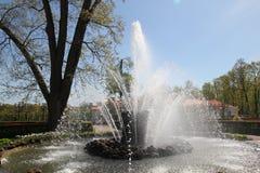 Gerbe de fontaine Photo stock
