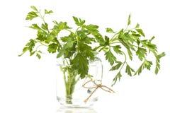 Gerbe de persil vert dans un verre Image stock
