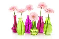 gerber ρόδινα vases γυαλιού Στοκ εικόνα με δικαίωμα ελεύθερης χρήσης