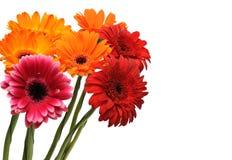 gerber букета цветастое Стоковые Изображения