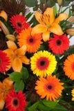 Gerber植物布置 免版税库存图片