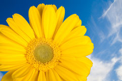 Gerber amarelo sobre o céu Fotografia de Stock Royalty Free