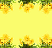 Gerber amarillo Fotografía de archivo