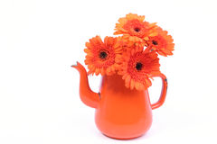 Gerber arancione Fotografia Stock Libera da Diritti