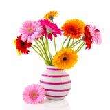 Gerber blommar i randig vas Royaltyfri Foto