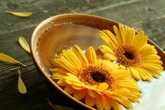 Gerber Blumen in der Schüssel auf altem hölzernem lizenzfreies stockfoto