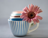 Gerber and Cups. Still-life with cups and a flower stock photos