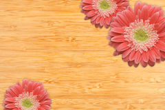 Gerber Daisies on a Bamboo Background. With Copy Space Stock Image