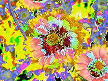 Gerber Daisies Looking Psychedelic. Gerber daisies have been altered to take on a colorful, fun psychedelic appearance vector illustration