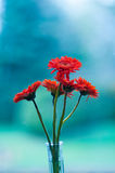 Gerber daisies. Red Gerber daisies in a vase against a blurred background stock image