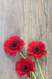 Gerber Daisies. Rustic wooden tree background with red Gerber Daisies Gerbera`s . Fresh flowers at the bottom of the image. Space for text royalty free stock photography