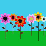 Gerber Daisy. Illustration of Gerber flowers daisy in a blue sky Stock Photos