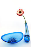 Gerber daisy and blue glass ware Stock Images