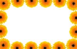 Gerber daisy border Royalty Free Stock Photo
