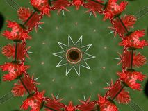 Gerber Daisy Circle Fotografia Stock