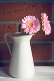 Gerber Daisy in vase Stock Images