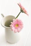Gerber Daisy in vase Stock Image