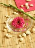 Gerber floating in bowl and stones. Stock Photography