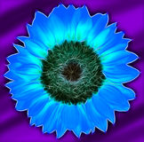 Gerber flower  abstract background Stock Image