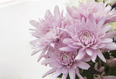 Gerber flower bouquet arrangement in home Stock Image