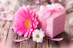 Gerber flower with gift Stock Images
