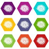 Gerber flower icons set 9 vector. Gerber flower icons 9 set coloful isolated on white for web Royalty Free Stock Images