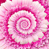 Gerber flower infinity spiral abstract background Royalty Free Stock Photos