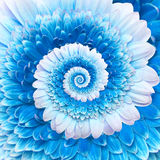 Gerber flower infinity spiral abstract background Stock Images