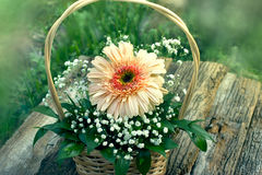 Gerber flower in wicker basket Stock Photos