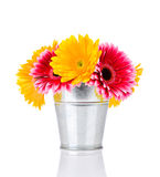 Gerber flowers in the bucket Stock Photography