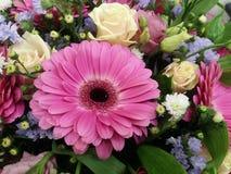 Gerber flowers Royalty Free Stock Photos