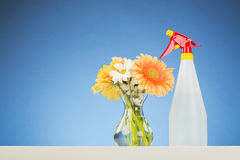 Gerber Flowers and a Spray Bottle Stock Photos