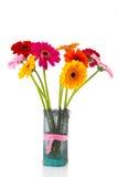 Gerber flowers in vase Stock Photos