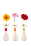 Gerber flowers in vases Royalty Free Stock Image