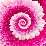 Gerber kwiatu nieskończoności spirali abstrakta tło ilustracji
