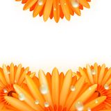 Gerber petals with water drops. plus EPS10 Stock Photos