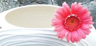 Gerber rosado en un florero Imagen de archivo